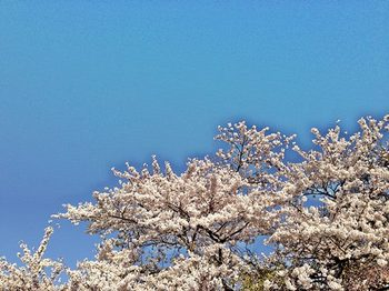 2014-04-23 06.26.13s.jpg